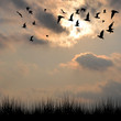 Landscape with silhouettes of grass and birds