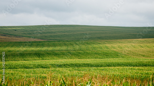 Cadres-photo bureau Sauvage Cultivated field of corn