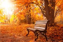Rural Wooden Bench.  Autumn Background
