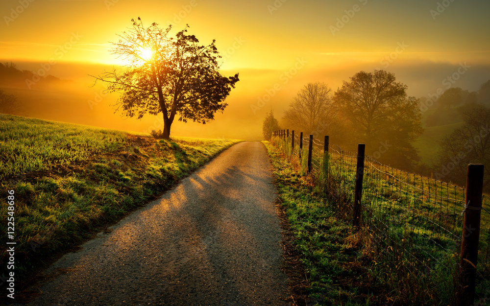 Fototapety, obrazy: Idyllische Landschaft bei Sonnenaufgang, mit Weg und Baum auf der Wiese