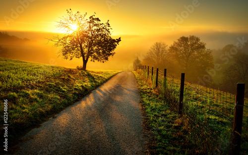 Foto op Plexiglas Oranje Idyllische Landschaft bei Sonnenaufgang, mit Weg und Baum auf der Wiese