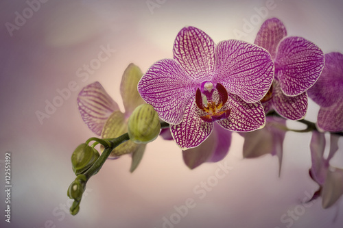 Recess Fitting Orchid Orchidee 03