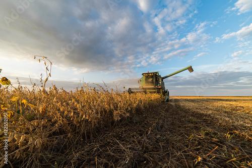 Fotografie, Obraz  soybean harvest in autumn