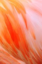 Flamingo Fathers