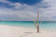 Dry tree on the shore of the Caribbean Sea on the white sand beach of Cayo Largo, Cuba
