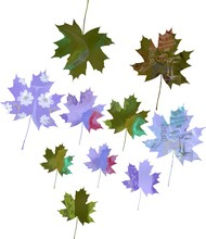 Set Of Watercolor Maple Leaves.