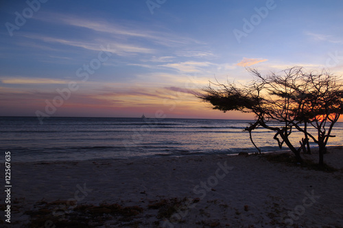 Aruban Sunset with Divi Divi Tree and Sailboat Poster