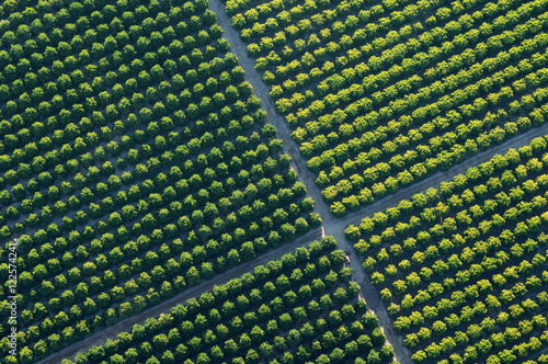 Wall Murals Vineyard Aerial view of vineyards