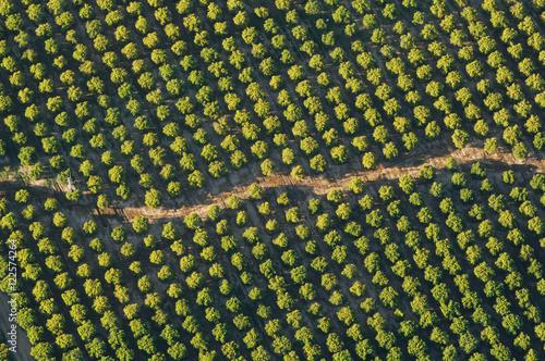 Photo sur Aluminium Vignoble Aerial view of vineyards