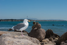 Seagull Perched On Rocks With ...