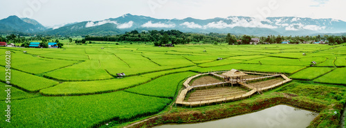 Poster Rijstvelden Fields in Nan, Thailand Panorama image