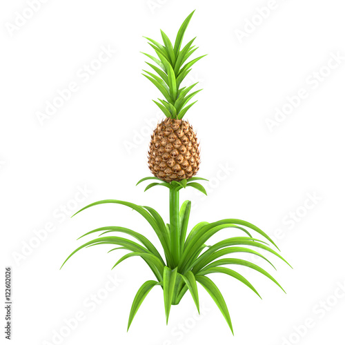 whole pineapple plant with stem and green leaves isolated. Black Bedroom Furniture Sets. Home Design Ideas