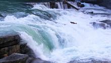 Salmon Jumping Up Rearguard Falls Fraser River Salmon Run