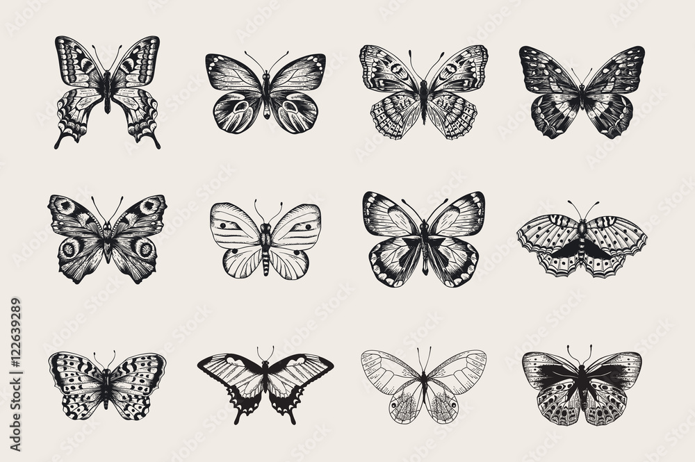 Fototapeta Set of butterflies. Vector vintage classic illustration. Black and white