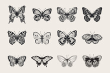 Set Of Butterflies. Vector Vin...