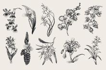 Exotic Orchid Set. Botanical Vector Vintage Illustration. Design Elements. Black And White