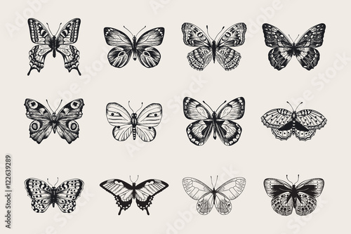 Canvastavla  Set of butterflies