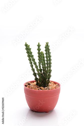 Foto op Canvas Cactus CACTUS
