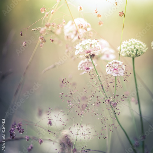Fotobehang Bloemen Amazing sunrise at summer meadow with wildflowers. Abstract floral background in vintage style, watercolor painting effect and blur