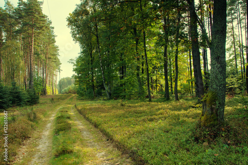 Canvas Prints Road in forest Mixed forest in early autumn