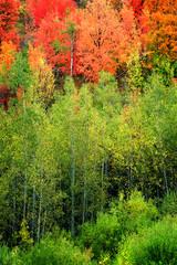 Panel Szklany Podświetlane Do pokoju Forest of Autumn Fall Trees Birch Maple
