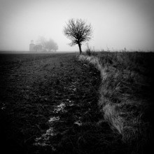 Tree In Field With Church In B...