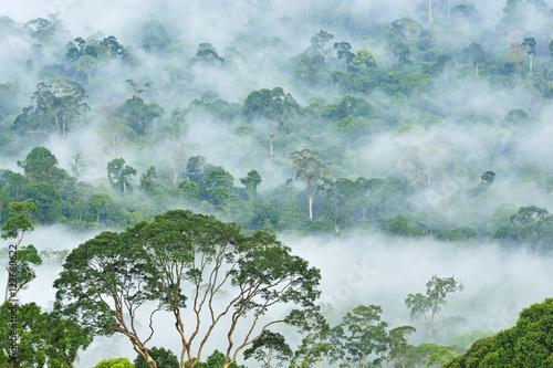 mgly-nad-lasem-tropikalnm-sabah-borneo-malezja