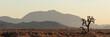 Cactus in desert, panorama