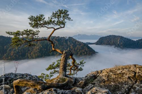 Fototapeta Poranne mgły i wschód słońca w Pieninach na Sokolicy i Wysokim Wierchu. obraz