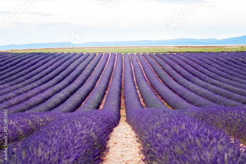 Beautiful landscape of lavender field in Provence in France