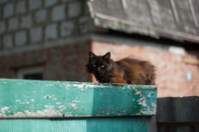 Ancient Rustic Cat Sitting On The Fence.