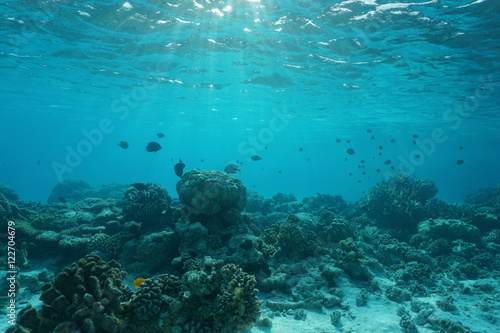 Underwater on a shallow coral reef with fish, natural scene, lagoon of Rangiroa, Pacific ocean, French Polynesia