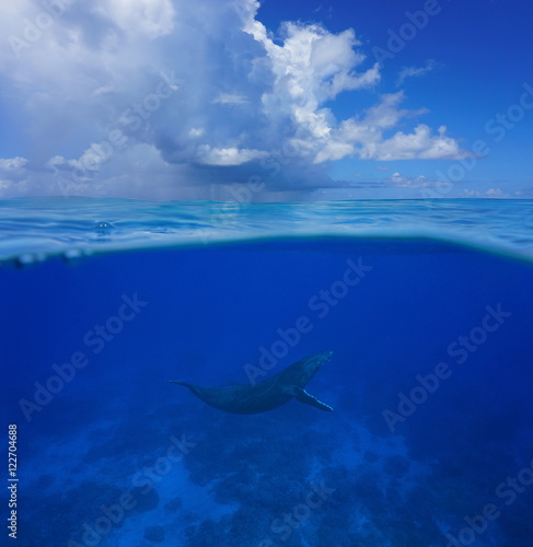 Fotografía  Above and below sea surface, a humpback whale underwater with cloudy blue sky sp