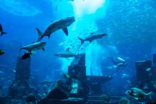 Large Aquarium In Hotel Atlant...