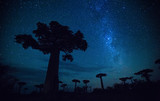 Fototapeta Sawanna - Starry sky and baobab trees. Madagascar