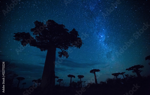 Poster Baobab Starry sky and baobab trees. Madagascar