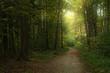 canvas print picture - Schimmernder Wald