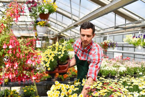 Obraz na plátně Gärtner mit Blumen in einem Gewächshaus // Gardener with flowers in a greenhouse
