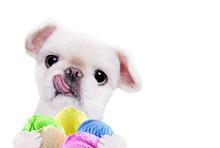Dog Eats Ice Cream. Isolated On The White.