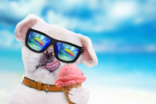 Dog Wearing Sunglasses Relaxing In The Sea Background.Dog Eats Ice Cream.