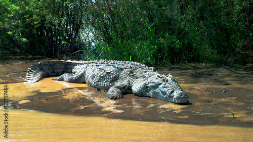 Poster de jardin Crocodile The Nile crocodile in Chamo lake, Nechisar national park, Ethiopia