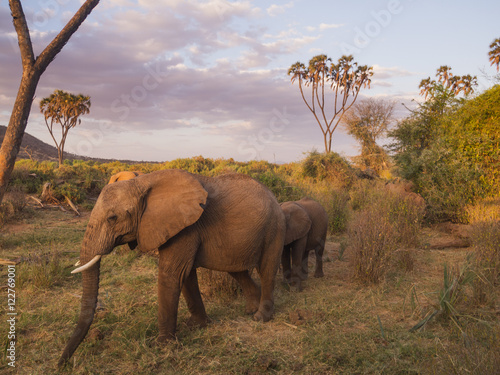 Foto op Plexiglas Afrika elephants in Samburu National Park, Kenya Africa