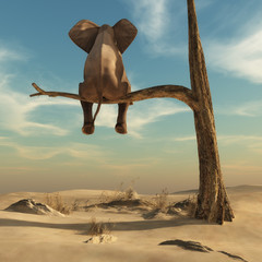 Fototapeta Elephant stands on thin branch of withered tree