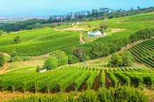 Grape Wineland Countryside Landscape Background In Cape Town, South Africa. Constantia Valley Drone View, In Western Cape, A Popular Wine Route.