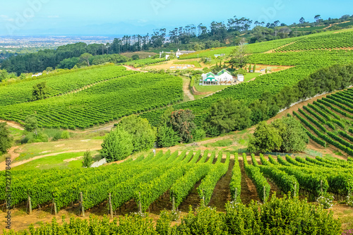 Grape wineland countryside landscape background in Cape Town, South Africa Poster