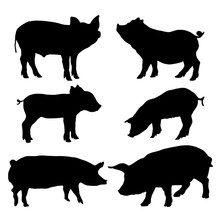 Pig Silhouettes Set. Vector Il...