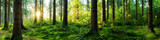 Fototapeta Las - Verträumter Sonnenaufgang im herbstlichen Wald