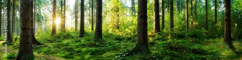 Foto auf Gartenposter Wald Verträumter Sonnenaufgang im herbstlichen Wald
