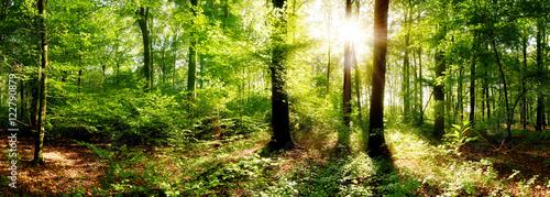 Fototapeten Wald Verträumter Sonnenaufgang im herbstlichen Wald