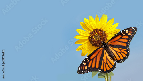 Photo  Monarch butterfly on sunflower against clear blue sky - a business card design w